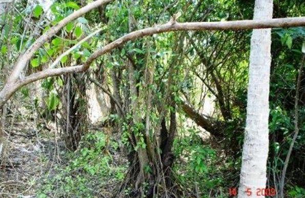 cenote-4