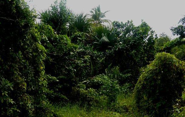 cenote-land-1