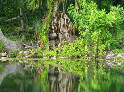 cenote-land-4