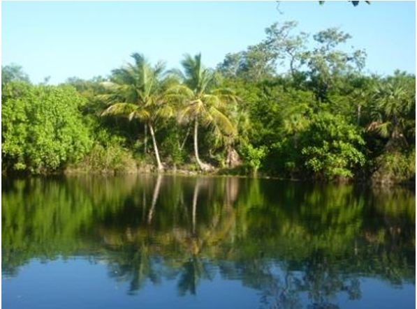 Huge lot 260 ha/650 acres with palapa small house and cenotes